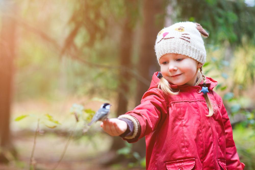 Детям о птицах